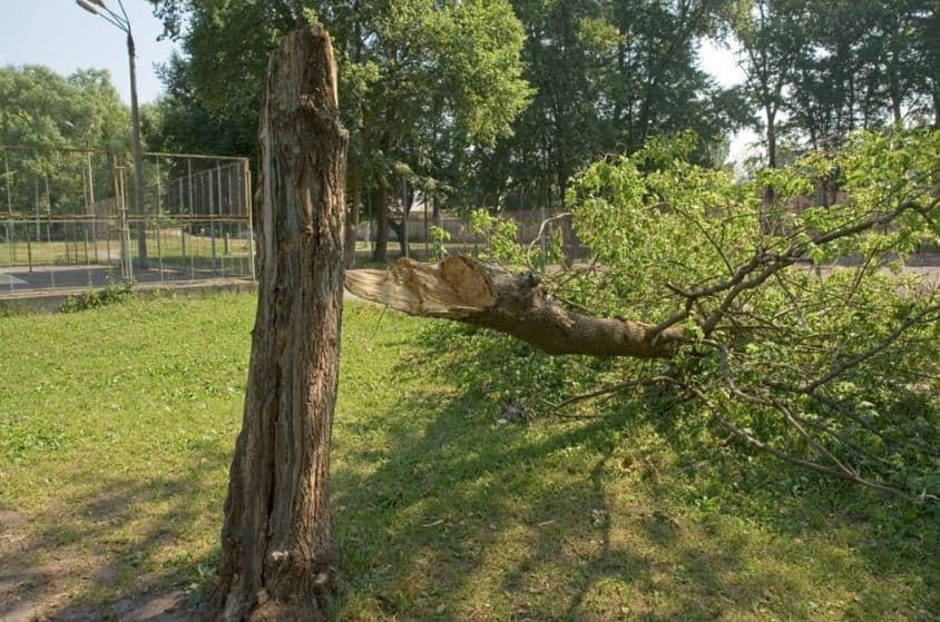 Tree fell over