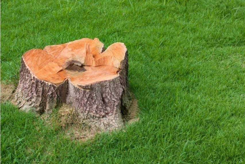 Grounded Stump