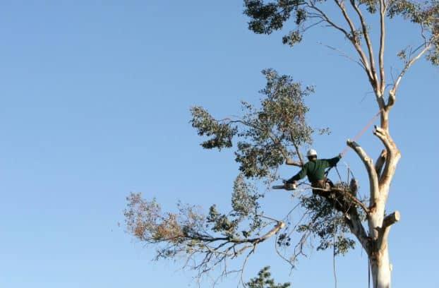 arborist working in trees